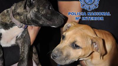 Dos de los perros rescatados por los agentes