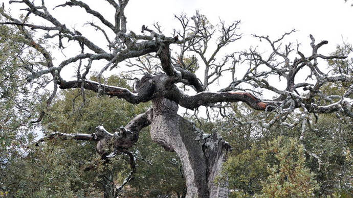 El cambio climático ha acelerado el deterioro de los bosques españoles en los dos últimos años