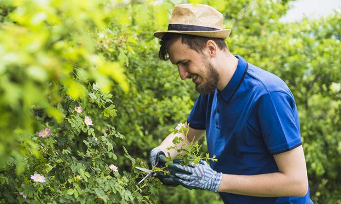 ¿Cómo realizar una buena poda en el jardín?