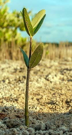 Planta creciendo en terreno árido este verano en Andalucía.