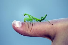 Información para entender y defender la naturaleza