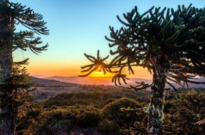 Parques Conguillío y Nahuelbuta serán prioridad para potenciar el turismo en La Araucanía