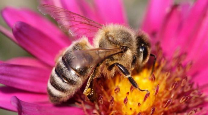 Paihuano tiene una gran biodiversidad de especies nativas, que incluye 21 tipos de abejas