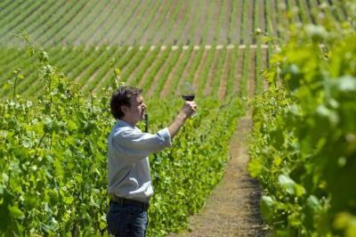 Con variadas actividades la Región de Valparaíso celebrará el Día del Vino en Chile
