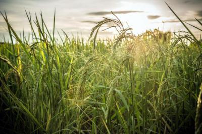 La 'agroecología', clave para el futuro de la humanidad según la FAO