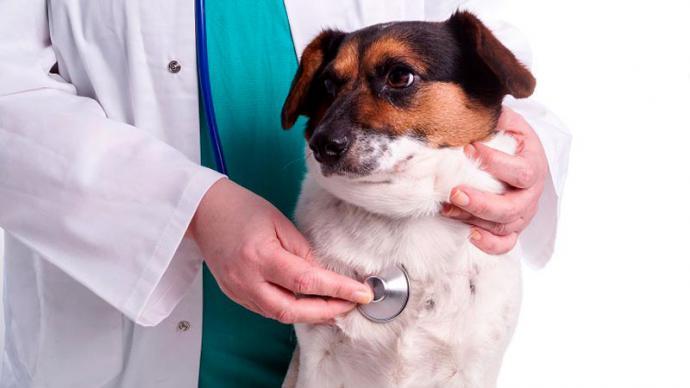 ¿Por qué es importante la protección contra parásitos internos en perros?