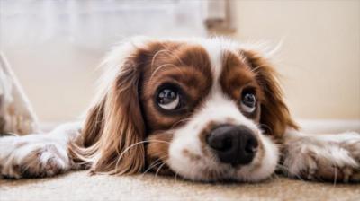 ¿Cómo debes calcular la edad que tiene tu perro en años humanos?