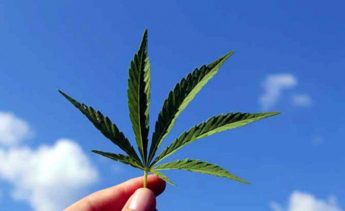 Autoflorecientes: una excelente semilla