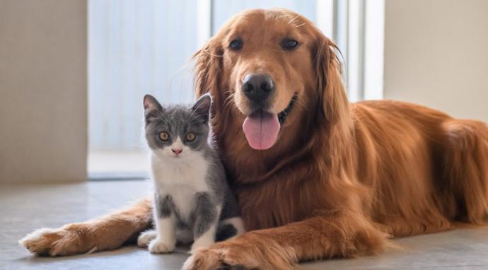 La vida con mascotas