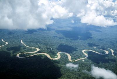 Amazonia (Imagen de Walker Vizcarra)
