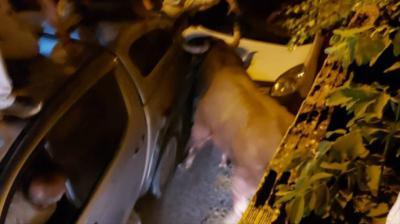 Piden al Gobierno de Castilla-La Mancha investigar las responsabilidades por el 'brutal atropello' del toro que huyó en Brihuega
