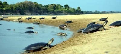 El Salvador busca explicación a la muerte de centenar de tortugas