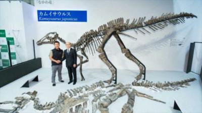 """El esqueleto reconstruido de una nueva especie de dinosaurio, nombrado """"Kamuysaurus japonicus"""", en Japón. (Imagen de https://www.hispantv.com/ )"""