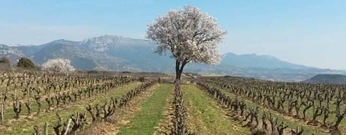 Sela 2014, el Rioja joven de Bodegas Roda