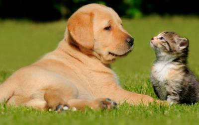 Los beneficios de las mascotas (animales de compañía) para las personas mayores