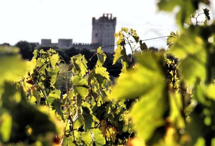 Medina del Campo reivindica su papel protagonista en el Ruta del Vino de Rueda