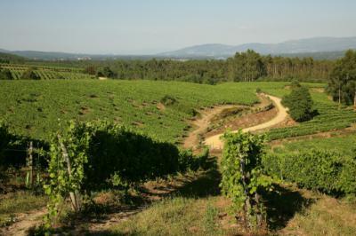 Terras Gaudas robotiza su viñedo