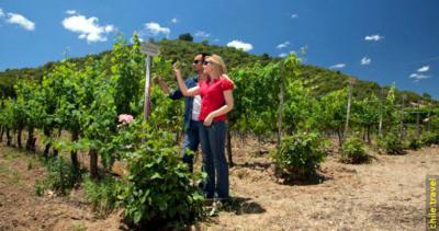 Marzo: mes del vino y enoturismo en la región del Maule