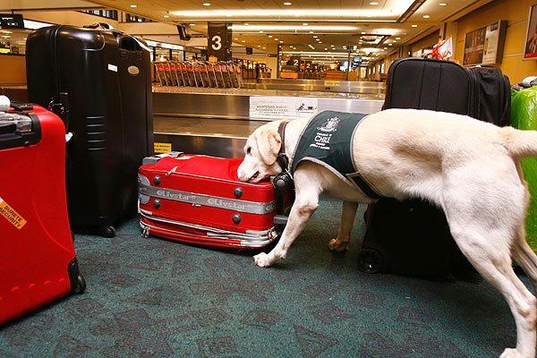 SAG busca reducir tiempos de espera en aeropuerto de Santiago de Chile