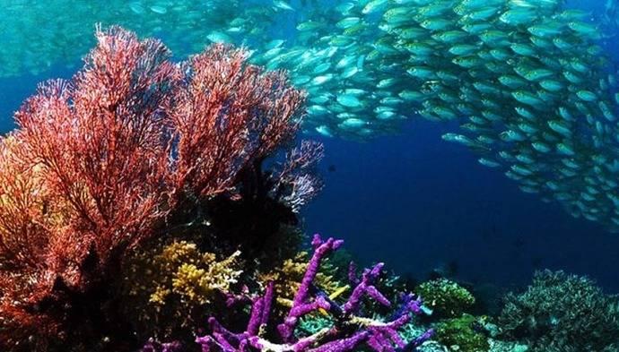 Latinoamérica se une por la salud de los océanos