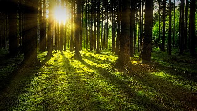 Cómo salvar bosques con nulo impacto ambiental