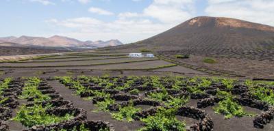 Vinos volcánicos y dónde encontrarlos