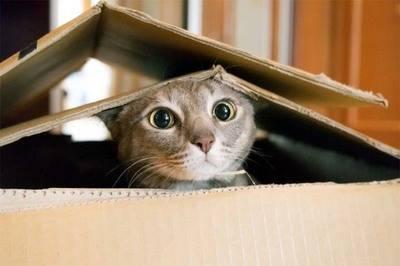Por qué la mala fama de los gatos?