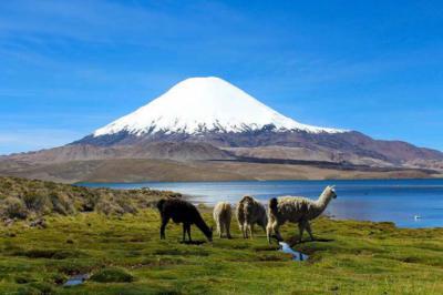Con un tramo de 93 Km finaliza la mayor obra vial de Ruta Andina en Altiplano chileno