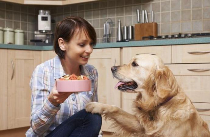 Lo que debe comer un perro según su edad