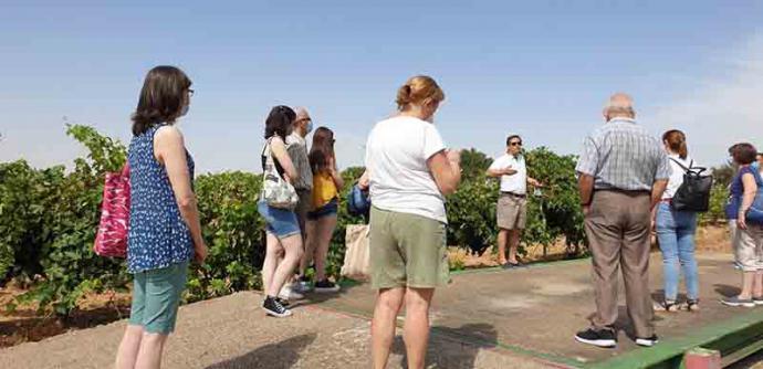Vive la vendimia 2021 desde el interior con la Ruta del Vino Cigales