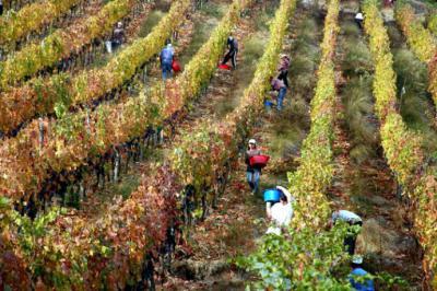 Chile recibirá a expertos de enoturismo en 2019