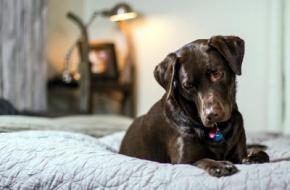 Peligros de que tu perro tenga acceso a todas las estancias de la casa