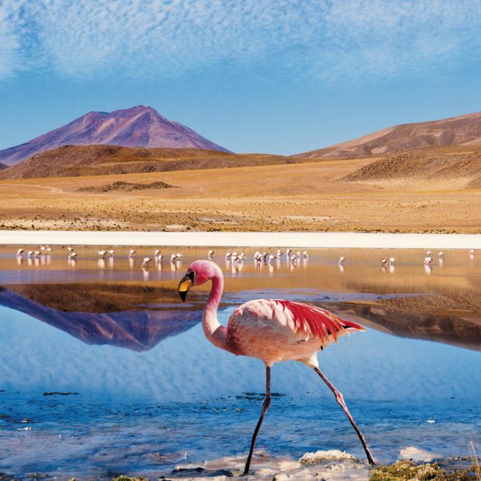 COP25 en Chile: ¡Turismo Tiempo de Actuar!