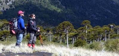 Anuncian licitación de centro de montaña y esquí en Parque Villarrica, Chile