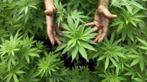 El auge de los growshops en España