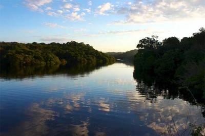 La primera lista de (casi) todas las especies de plantas de la Amazonia