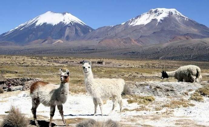 'Sernatur Arica y Parinacota' inició campaña de vacaciones de invierno para promover llegada de turistas