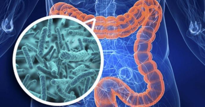 Probióticos, ¿moda o necesidad?