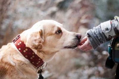 La artrosis canina, un dolor que se puede evitar