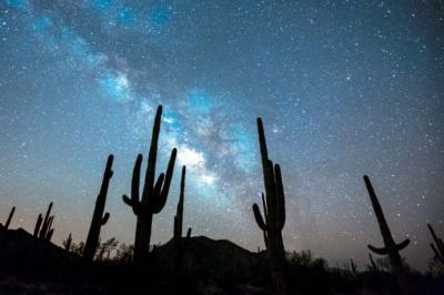 Usan microchips en los gigantescos cactus de Estados Unidos para evitar su robo