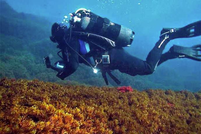 Fondo marino ocupado por el alga invasoraRugulopteryx okamurae.