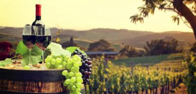 Nuevos vinos para nuevos tiempos