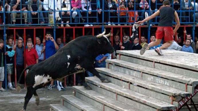 El toro 'Ratón', famoso por sus cogidas mortales, en un festejo en Canals en 2011
