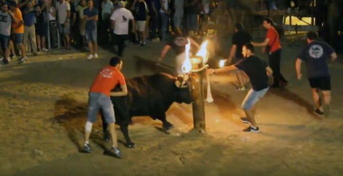El 'bou embolat' en El Grau de CastellónYOUTUBE