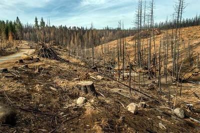 Le fallamos a los bosques: en dos años el mundo ha perdido suficientes árboles como para cubrir España