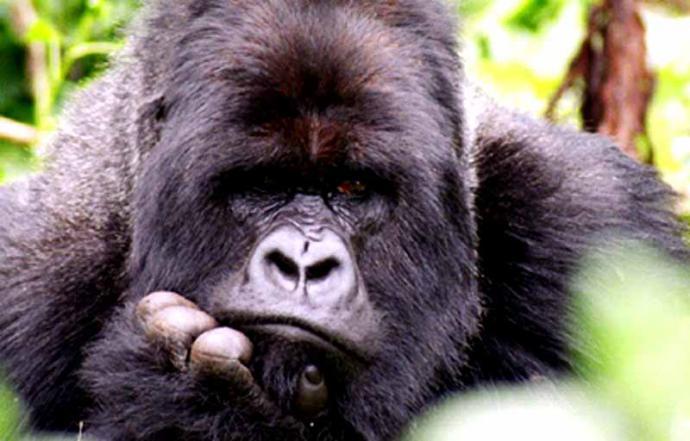 Animales en mayor peligro de extinción en 2019