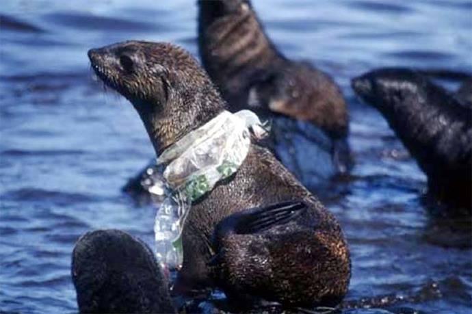 Microplásticos, la amenaza imperceptible que vive en el mar