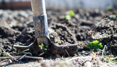 Prepara el jardín para la llegada del frío