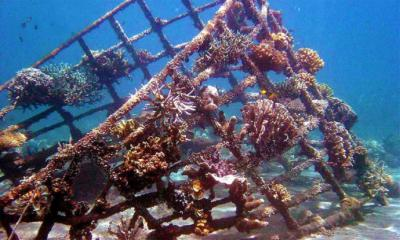 Instalan arrecifes artificiales en Maitencillo y Quintay