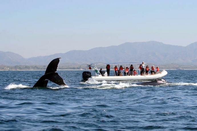 Comienza el avistamiento de ballenas que llegan a la costa para reproducirse y cuidar a sus crías